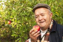 更老的人在果树园 免版税库存照片