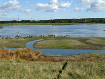 老的大池塘停泊 免版税库存照片