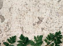 老石地板有绿色蕨背景 库存图片