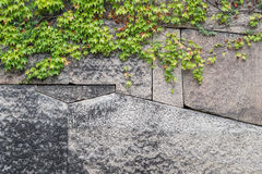 老石墙和绿色常春藤 图库摄影
