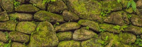 老石墙纹理包括在堡垒鹿特丹,望加锡-印度尼西亚的绿色青苔横幅,长的格式 库存图片