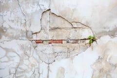 老石墙纹理背景。 免版税库存照片