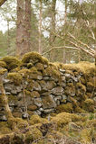 老石墙 库存图片