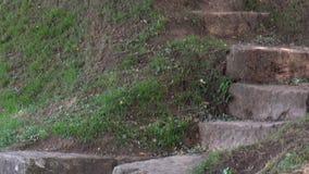 老石导致森林的楼梯和小径 股票视频