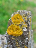 老石纪念碑在公墓 免版税图库摄影