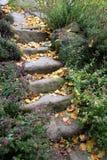 老砂岩用下落的叶子盖的台阶和芳香草本 免版税库存照片