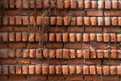 老砖背景、纹理和样式 大红砖墙壁 免版税库存照片