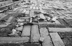 老砖背景的黑白低角度视图 库存照片