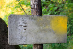 老空白签到森林 免版税库存图片