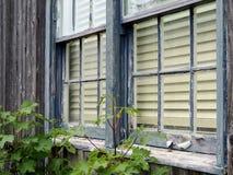 老窗口和削皮油漆 免版税图库摄影