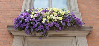 老窗口和花在一个老大厦 库存图片
