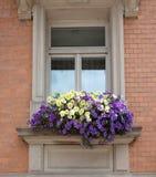 老窗口和花在一个老大厦 免版税图库摄影