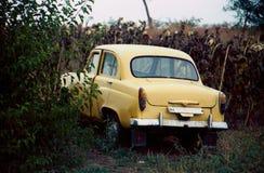 老米黄汽车 它在森林里,领域路的 回到视图 有牌照的室 图库摄影