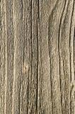 老粗砺的木头的纹理 库存图片