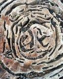 老粗砺的纹理木头 库存图片