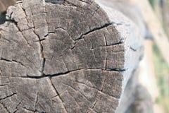 老粗砺的纹理木头 木纹理 免版税库存图片