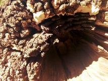 老粗砺的纹理木头 免版税库存照片