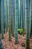 老纯净的青绿的竹森林 免版税库存照片