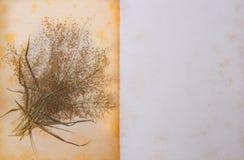 老纸和干花。 免版税库存照片
