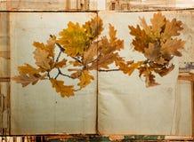 老纸纹理和详细秋季分支 图库摄影
