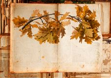 老纸纹理和详细秋季分支 库存照片