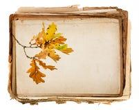 老纸纹理和详细秋季分支 免版税库存照片