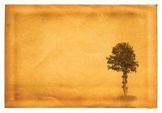 老纸结构树 免版税库存图片