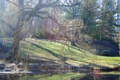 老结构树和草甸 免版税库存图片
