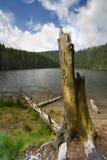 老结构树在黑色湖 免版税库存照片