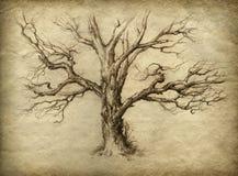老结构树 向量例证