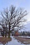 老绿色树在Tsarskoe Selo在春天在日落 库存图片