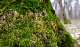 老绿色树桩 库存图片
