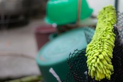 老绿色羽毛喷粉器 库存照片