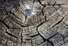老腐烂的树桩 库存照片