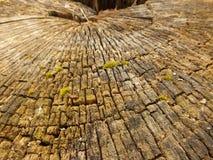 老腐烂的树桩 免版税库存照片