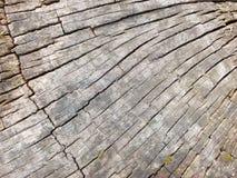 老腐烂的树桩 免版税库存图片