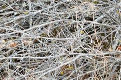 老腐烂的矮小的稀薄,被毁坏的棍子,枝杈,与结的秸杆纹理和烘干有用青苔盖的镇压的叶子 库存照片