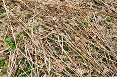 老腐烂的老棍子,分支,与结的秸杆纹理和烘干有镇压的用青苔报道的叶子和结 库存图片