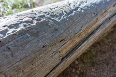 老自然木日志背景,灰色颜色云杉,与镇压,树皮甲虫的踪影 特写镜头,抽象背景, vi 库存图片