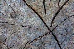 老自然树桩裂缝纹理 免版税库存图片