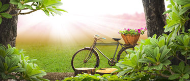 老自行车公园 库存照片