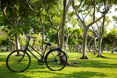老自行车在公园。 免版税库存照片