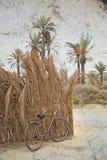 老自行车在撒哈拉大沙漠 库存图片