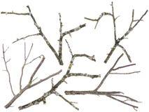 老苹果和查出的樱桃树分行 免版税库存照片