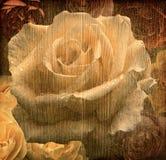 老葡萄酒玫瑰背景 库存照片