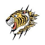 老虎传染媒介设计 向量例证