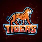 老虎吉祥人传染媒介 体育商标设计模板 橄榄球或棒球例证 学院同盟权威,学校队 库存照片