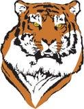 老虎向量 向量例证