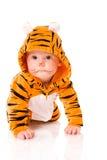老虎婴孩 库存照片