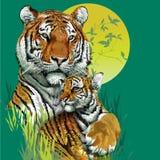 老虎家庭在密林。 免版税库存图片